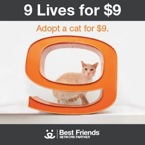 9-Lives for $9